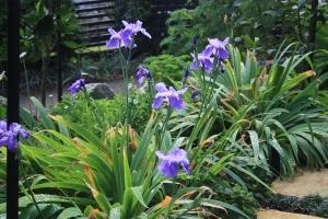 Iris along path