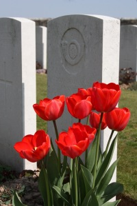 Red tulips beside grave