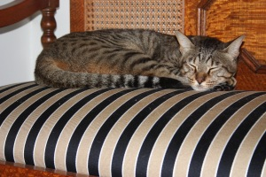 Not even cyclonic rain can disturb a cat nap.