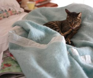 Cat having Blanket Date