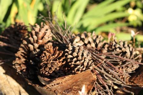 Web_pinecones_9470
