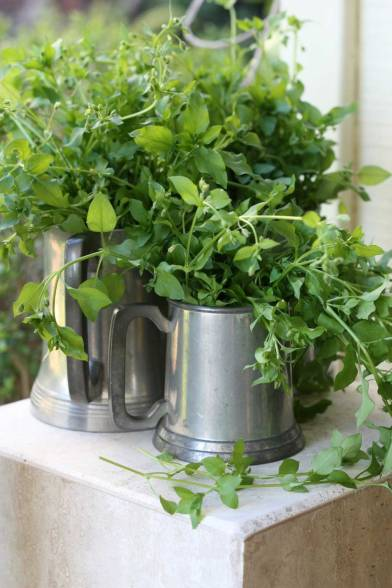 Web_chickweed-in-mug2